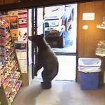 urso-lojas
