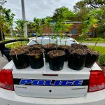 maconha-florida-policia